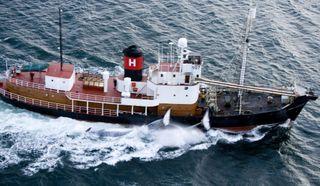 Whales _ Iceland _ Sigursteinn Másson005 copy