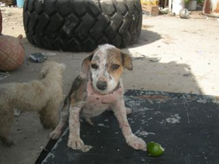 Puppy B at the dump (07-09)