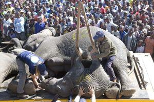 Elephants_Malawi