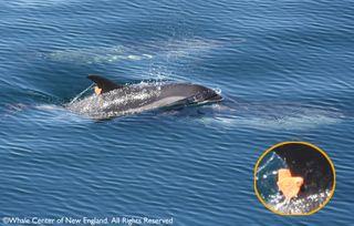 DolphinZoomTag