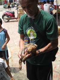 Mr. De Zhong Du with Little Brown