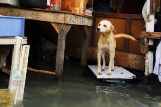DogkeepingabovewaterLOW