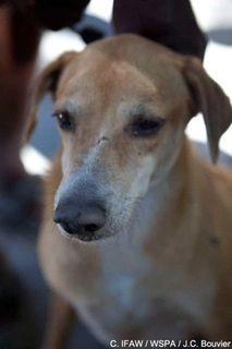 image from http://animalrescue.typepad.com/.a/6a00d83451c1c569e20120a8326ff4970b-pi
