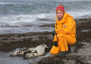 IFAW's Sheryl Fink next to the remains of a harp seal pup.