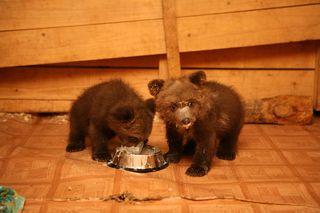 Bearseatingalone