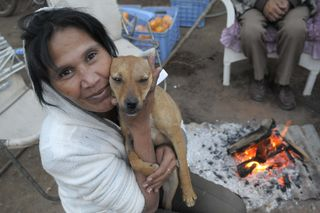 Saskia Karrias, veterinarian from IFAW's Johannesburg project, cradles a dog before sterilization.