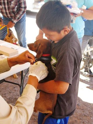 Shown here is a little boy doing a good job of holding on to his dog for a Frontline application. Fleas and ticks are a real disease problem on the Navajo Nation; Rocky Mountain Spotted Fever is carried by ticks and there was even a local case of Bubonic Plague last year. c. IFAW