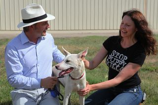 IFAW rescued dogs arrive to Longmont, Colorado