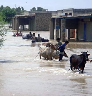 IFAW Rushes to Aid Animal Survivors of Pakistan's Tragic Flooding.