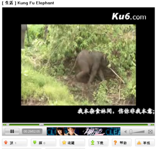 Video of an Asian elephant in a Yunnan province village cornfield...