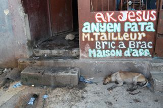 A dog in an alley in Port-au-Prince, Haiti.