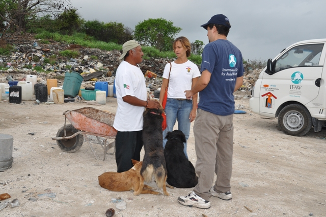 Rescue Underway in Cozumel, Mexico for evicted dogs and cats