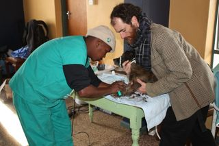 IFAW's animal welfare assistant Lazola Sotyingwa with Cobus Ferreira of the Department of Agriculture, preparing a dog for surgery.