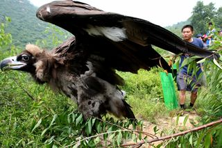 IFAW China: Beijing Raptor Rehabilitation Center Adds to Success, Receives High Praise