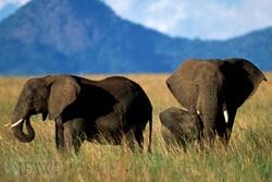 Elephants_wm_1