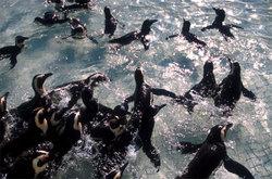 Penguinbath